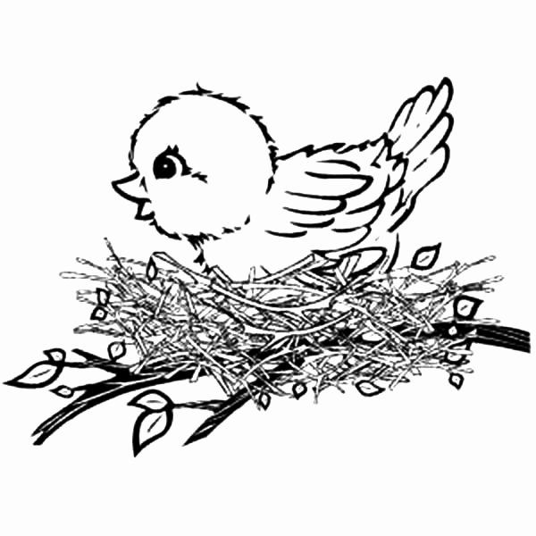 28 Bird Nest Coloring Page In 2020 Butterfly Coloring Page Bird