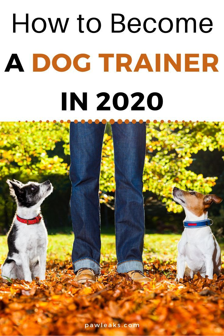3 Steps To Become A Dog Trainer In 2020 Pawleaks Become A Dog Trainer Dog Trainer Dog Training School