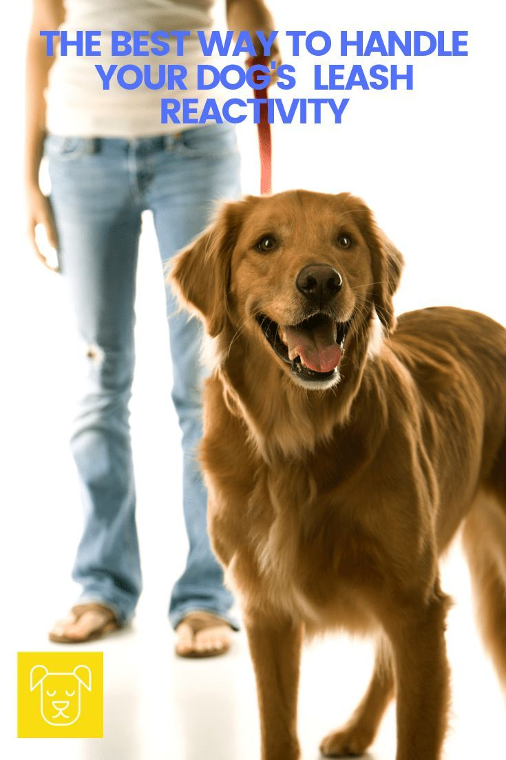 The Best Way To Tackle Leash Reactivity Dog Training Books Dog