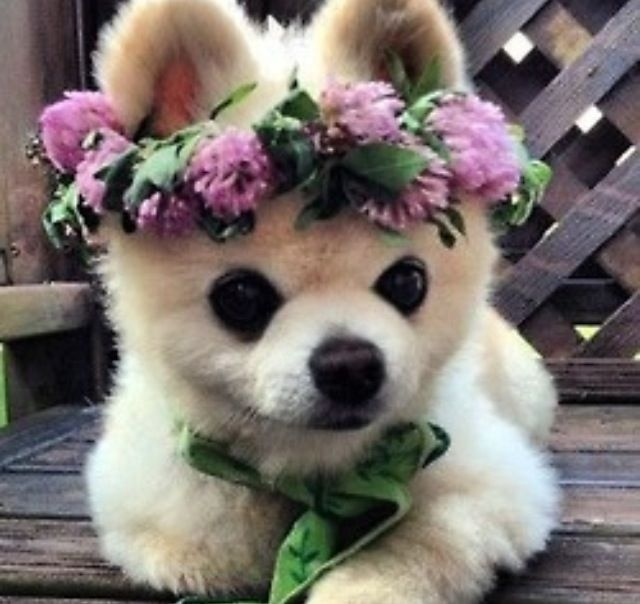 Puppy Rose Crown Precious Loving Animals Pinterest