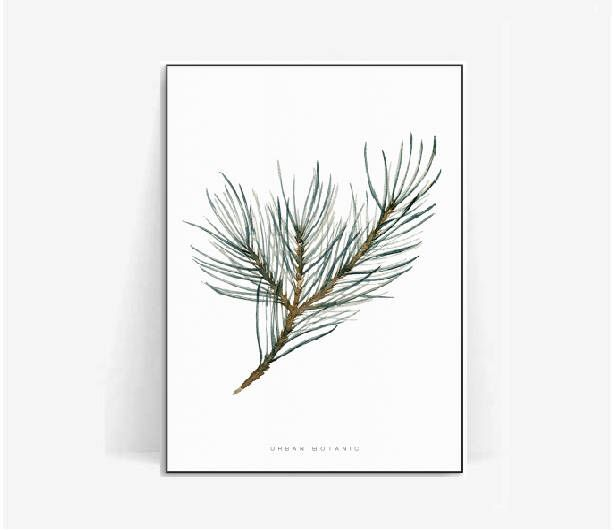 pine tree watercolor botanical poster print/pine leaf print/plant print/herb pine poster herb/botanical print pine tree watercolor/pine leaf by BeautyOfPrints on Etsy https://www.etsy.com/listing/510771522/pine-tree-watercolor-botanical-poster
