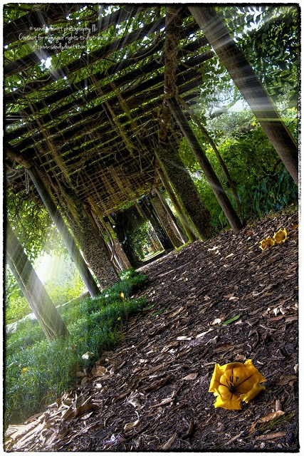 15 Best Images About Fl Photography Locations On Pinterest