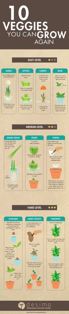 Gemüse neu wachsen lassen