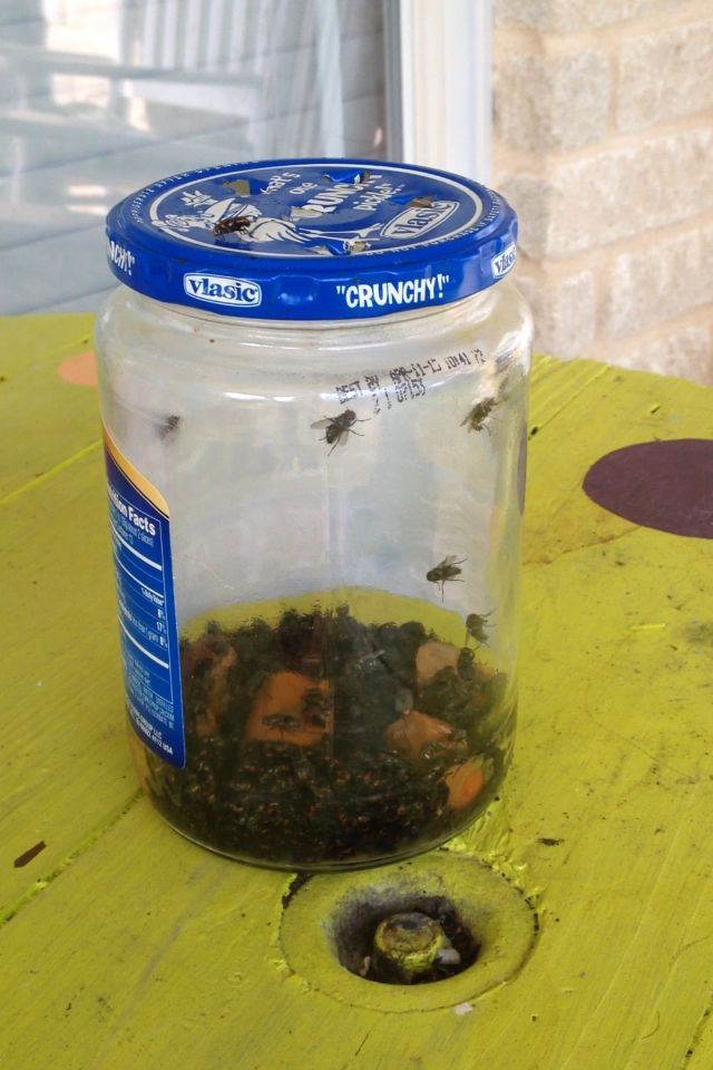 Best EVER fly trap!!  Add a cut up hot dog and a tablespoon of maple syrup with about 2-4 ounces of water to a jar with a lid.  Poke a few holes in the lid...(big enough for the flies to easily enter) and believe me, they're too dumb to find their way out!