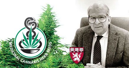 """http://sensiseeds.com  """"The Sensi Seed Bank is the most comprehensive cannabis seed bank in the world and it is, from a medical point of view, essential it remains functioning and intact."""""""