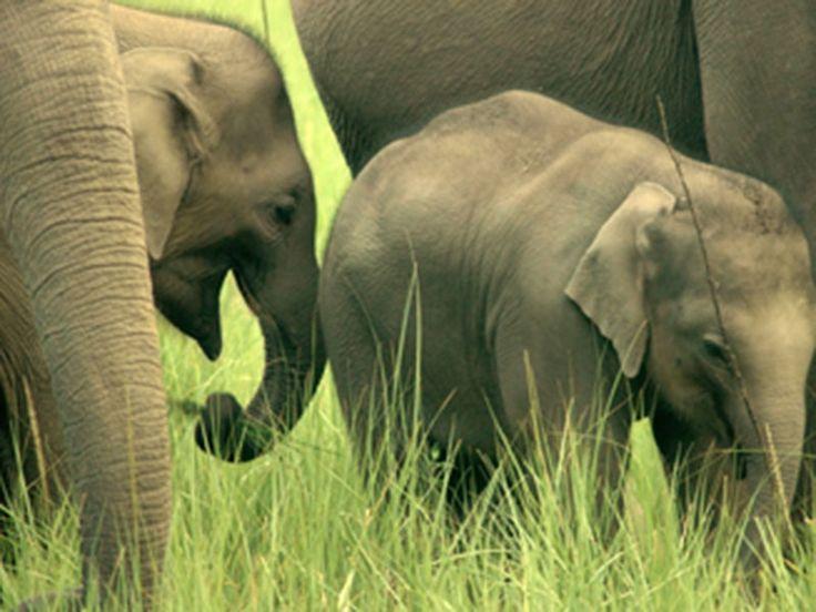 Chilla Wildlife Sanctuary - in Uttar Pradesh, India