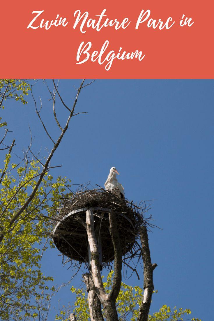 Zwin Nature Parc in Belgium
