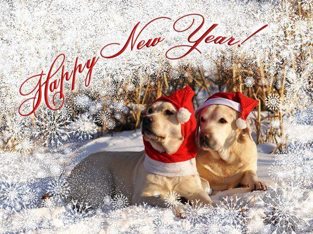 Какие есть смешные, прикольные, забавные открытки в Новый год Собаки2018?