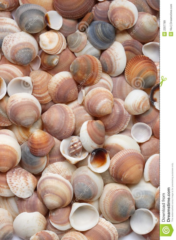 112 Best Beyond The Sea Images On Pinterest Clam Shells