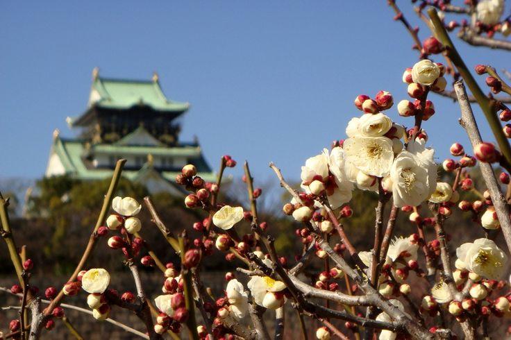 Castelo em Osaka  www.sonhojapones.com