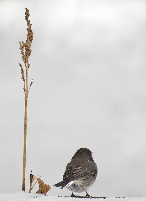 Snow Bird Speaks to me of Flowers that will Bloom again in Spring by Katprints Photography, via Flickr