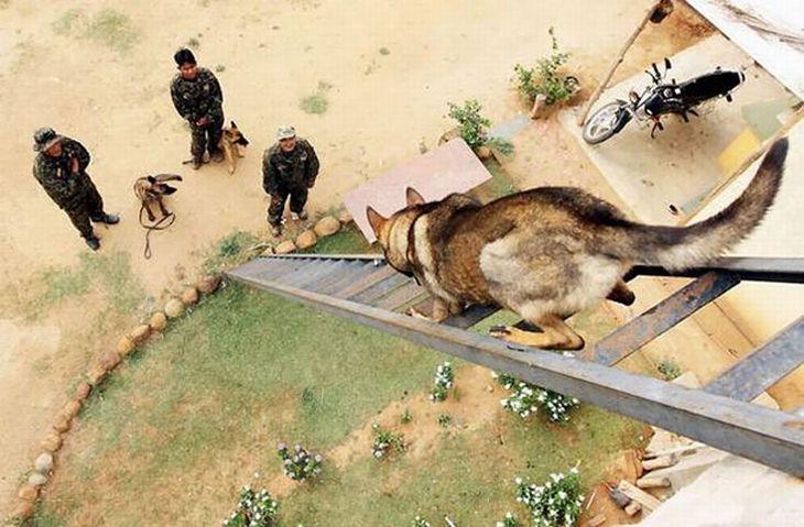 Los Perros Son Las Criaturas Más Leales | Naturaleza - Todo-Mail