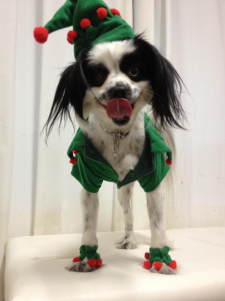 Santas Lil Elfie