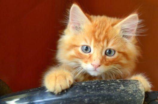 Dlaczego kot potrzebuje zabawek?