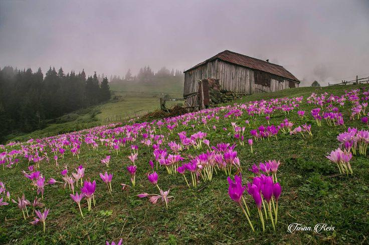 Trabzon / Eastern Blacksea Region of Turkey (Photo: Turan Reis)
