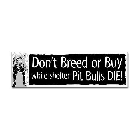 Please save a homeless pit bull!