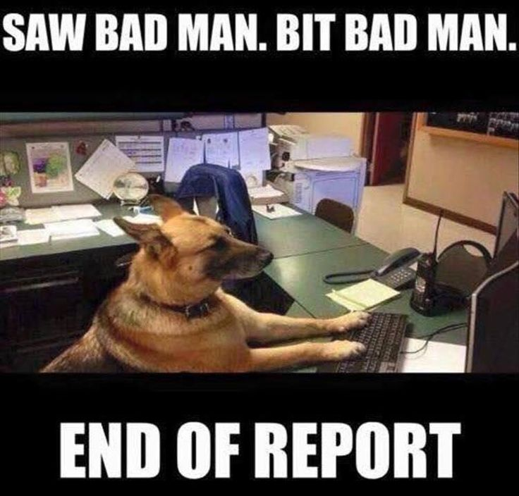 Another concise police report from a dedicated officer with the call sign K9 gets submitted to the procurator fiscal to make the decision whether there is enough evidence to bring the matter to court  ( surprisingly officer K9 has never attended court in relation to police duties )  so he's BARKING MAD about never being called as a witness after getting his teeth into his many cases 👍