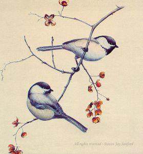 BC Chickadees - Adk Life - rr - small