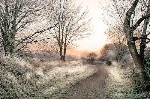 English Countryside - Pictures of England- frosty mist, North Dorset trailway Shillingstone