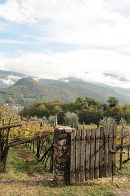 Kaltern – der bekannte Ferienort am wärmsten See der Alpen verspricht mediterranes Lebensgefühl und eine unvergleichliche Landschaft zwischen Weinreben, Olivenbäumen und Zypressen. Dazu noch …