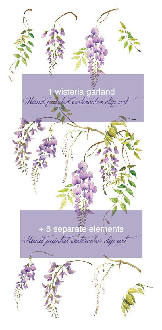 Watercolor Wisteria Clipart Printable Lilac Flower Illustration Hand Painted Floral Art Climbing Plants Garden Artwork Wisteria Invites Flower Illustration Floral Painting Floral Art