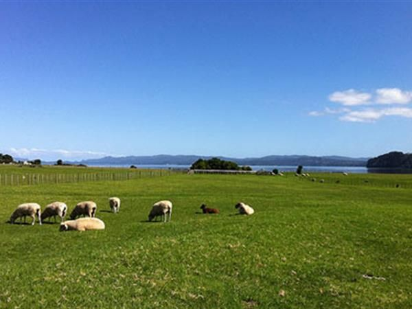Auckland South Volcano Tour Half Day, Discover Auckland's interesting volcanic history and foreshore walk, See spectacular views over Auckland City from the remaining cone, craters and fire pits of Mangere mountain.TIME Unlimited Tours