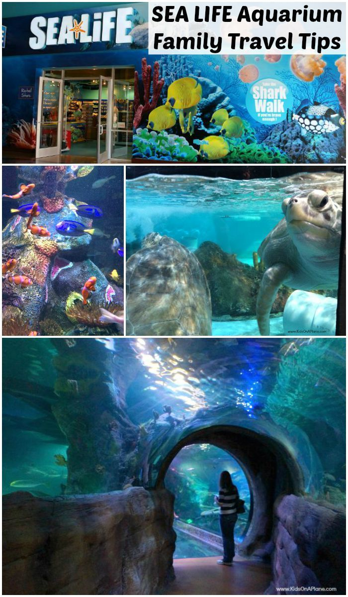 SEA LIFE Grapevine Aquarium Review in Grapevine, Texas
