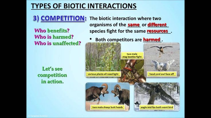competition predation and symbiosis Write the following terms on the board: competition, predation, symbiosis,  mutualism, commensalism, and parasitism do not include the definitions yet  first, ask.