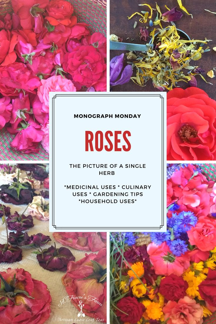 Ways To Use Wild Rose Petals Edible Wild Plants Rose Petals Wild Roses