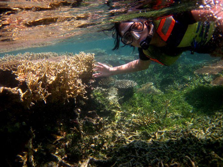 explore the dazzling coral gardens...