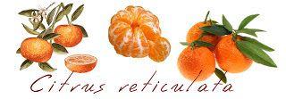 Μέσα στα φρούτα του χειμώνα κυριαρχεί και ένας μικρός θησαυρός:  το μανταρίνι  το μανταρίνι είναι ένα μικρό θαύμα-σε επόμενη ανάρτηση όλα...