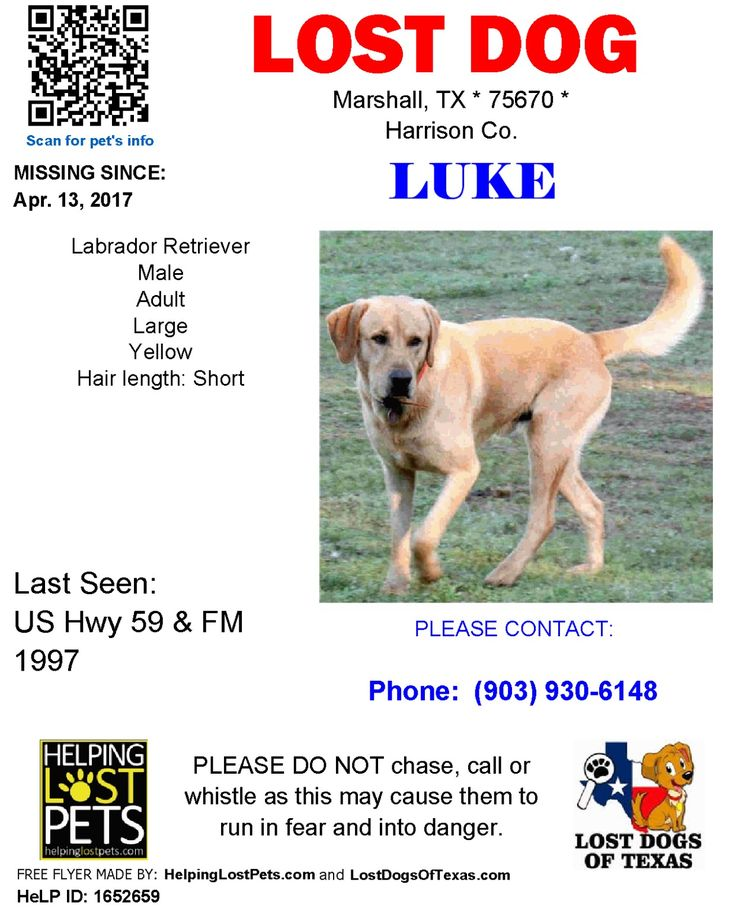 PLEASE HELP US FIND LUKE!!! Our son is HEARTBROKEN. Marshall,Tx he IS MICROCHIPPED. Orange Collar, he is not neutered. (LOST DOG, Marshall, Texas, east Texas, pineywoods, stolen dog, dog, animal, LABRADOR, yellow, fox red, lab, missing dog, stolen dog) lostdog #stolendog #missingdog #Labrador #easttexas #marshalltexas