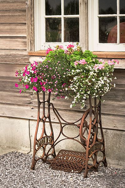 Next time you spy an old sewing machine's treadle base at a flea market, think twice before you walk away. These ornate metal supports ($30 and up on craigslist.org) can be repurposed as charming stands for outdoor containers. Click for tips on how.