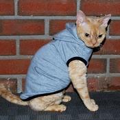 Kitty Hoodies!!! ADORABLE