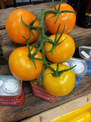 Bolzano tomater