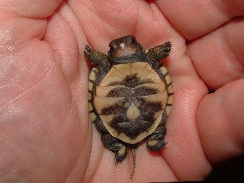 Most adorable baby turtles