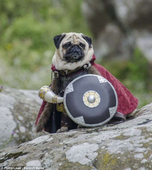 Heel Gandalf! Dog owner dresses his pet pugs in hilarious ...