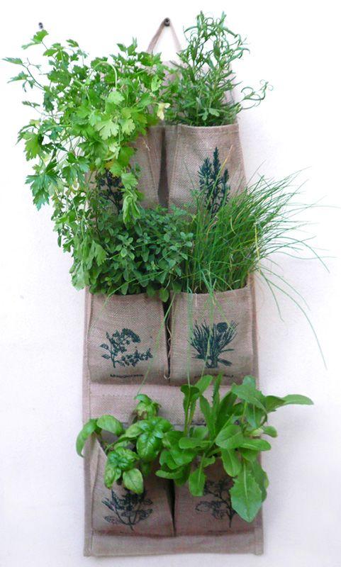 Anche questo modo di coltivare le erbe a parete ci consente miracoli con il poco spazio che abbiamo a disposizione in città