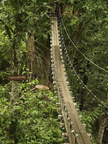 Suspension bridges through the trees on Vancouver Island? #YouWontBeSorry #Sooke www.youwontbesorry.com