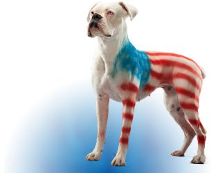 Costumes For Dogs | Homemade Dog Costumes | Pet Costumes For Dogs -PetPaint