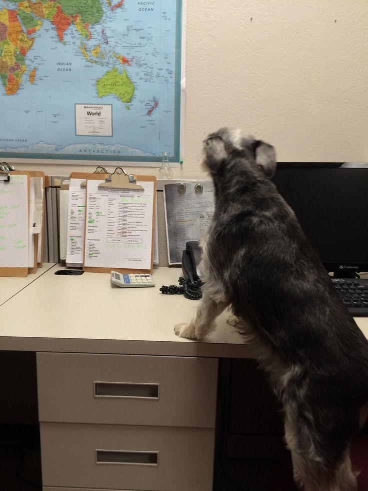 15 best animal shipping service images on pinterest pet shipping david landers has started airvets pet relocation and focuses on international pet shipping services sciox Gallery
