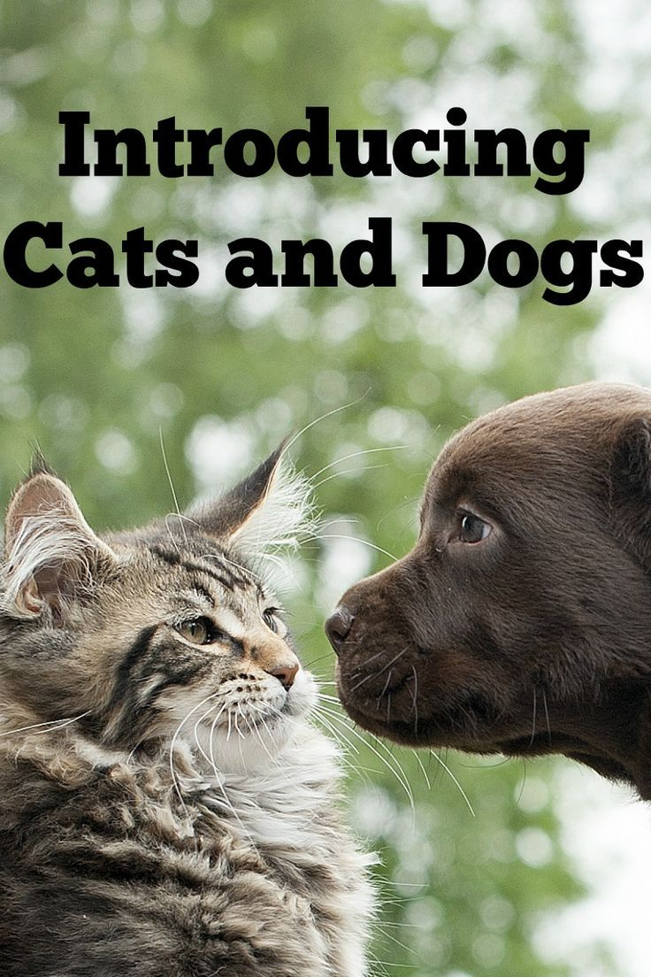 How to Introduce Cats & Dogs without Fights | Enemies, Bff ...