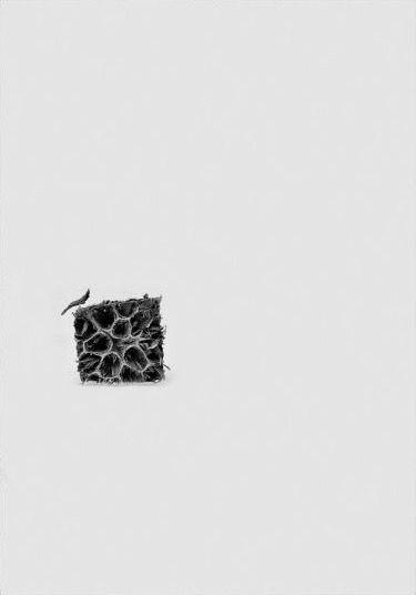Michele Guido, liquidambar 07.03.07, 2007, Light jet print, dbond and plexiglass, cm 260 x 180
