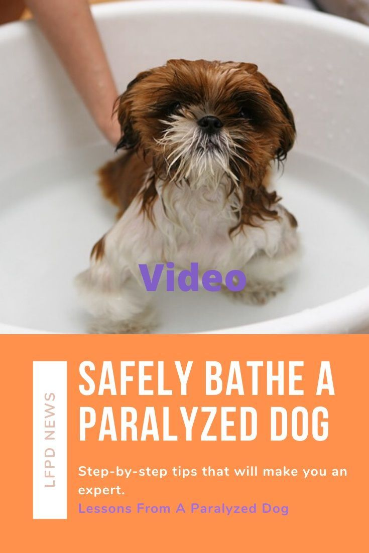 How To Safely Bathe Your Paralyzed Dog Video Paralyzed Dog