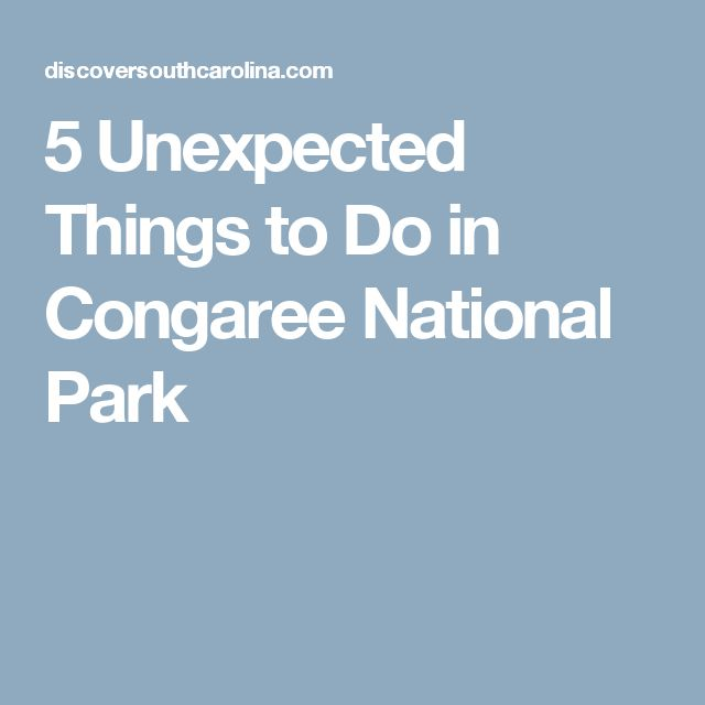 5 Unexpected Things to Do in Congaree National Park