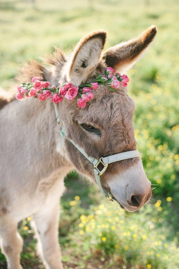 farm bridal session, donkey with floral crown, farm animal wedding inspiration