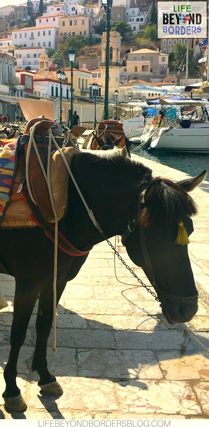 Donkey ready to take tourists to their hotel on Hydra Island, Greece where there are no cars