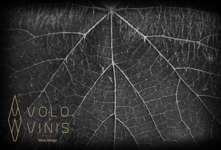 VOLO VINIS Wine Design