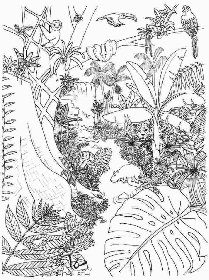 ausmalbilder regenwald tiere  tiffanylovesbooks