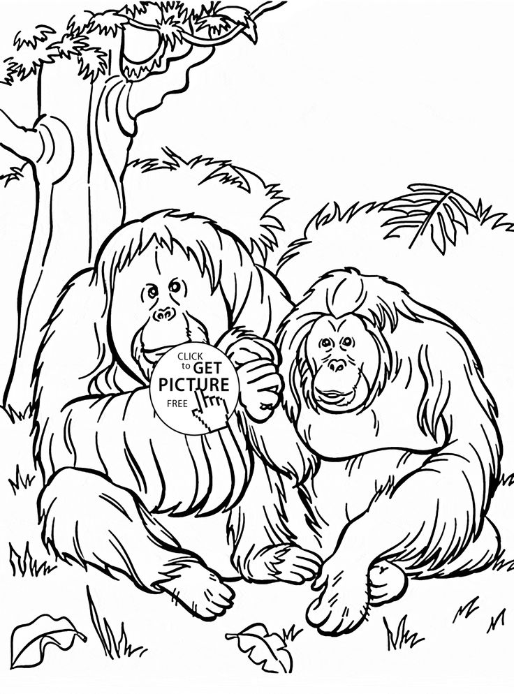 Orangutans coloring page for kids, animal coloring pages